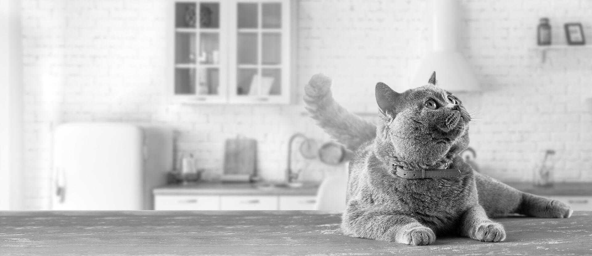 Mcl Bentonite - Cat Litter